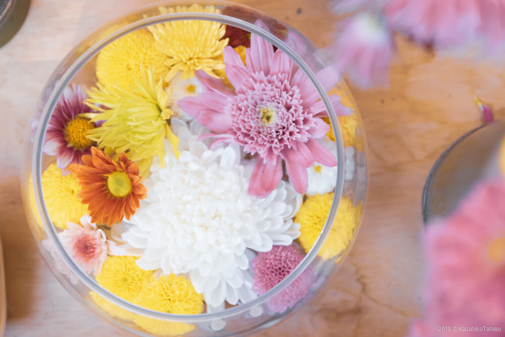 高幡不動尊の菊